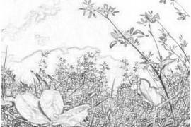Как заготовить и сохранить лекарственные растения