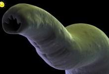 Кишечные паразиты
