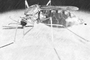 Малярия - опасная инфекция, с которой можно повстречаться