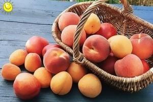 Витаминный абрикос