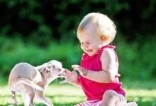 Заводим домашнее животное