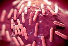 Зачем кишечнику микробы