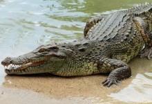 10 интересных фактов о крокодилах, которых вы не знали