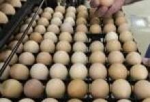 Продажа инкубационного яйца