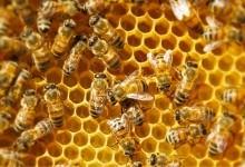 Польза для здоровья от употребления меда