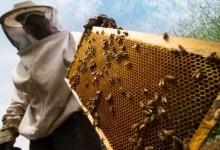 Преимущества пчеловодства