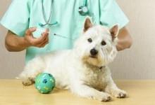 Вакцинация собак - от чего стоит защищать своих четвероногих?