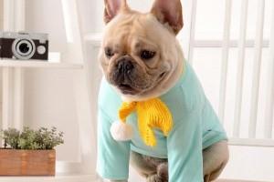 5 вещей, которые следует учитывать при выборе одежды для собак для вашего щенка
