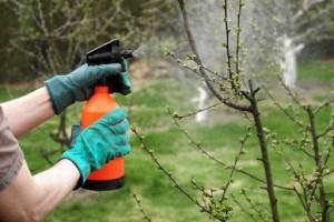 Как предотвратить появление вредителей в саду