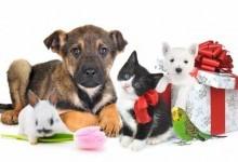 Преимущества покупки товаров для животных онлайн